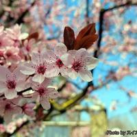 日本に興味がある方集合、日本会がツォフィンゲンで初開催!