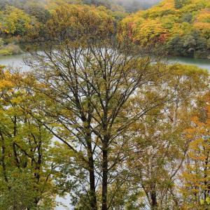志賀高原 丸池