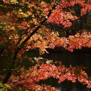 五色沼を歩く 4.桧原湖
