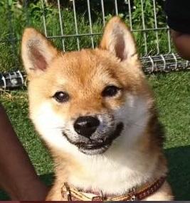 ペット保険用の証明写真