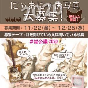猫会議議長選の立候補猫募集が始まります!今年のテーマは、、、@nara_mise