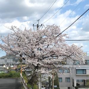 桜より甘いもの?