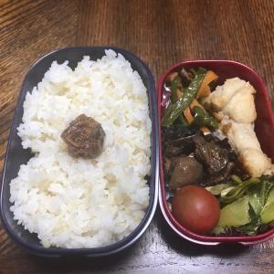 今日のお弁当と収穫