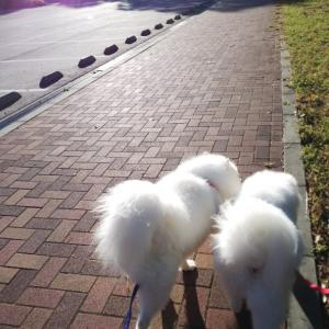 今日も公園お散歩とドハマり~