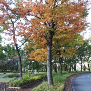 公園の紅葉❗️