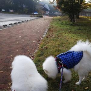 金川の森公園の紅葉と、触れ合い~❤️