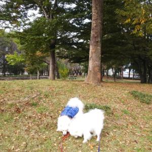 金川公園で朝んぽと、セブンのフレクル