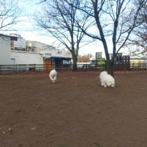 ひまちゃんの日㊗️朝ランと桃公園昼んぽ❣️
