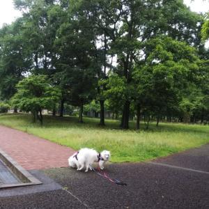いつもの公園で早朝んぽ❣️