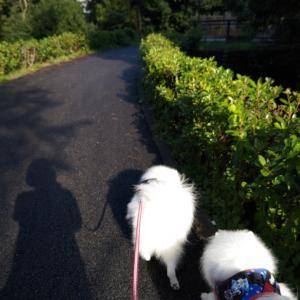 森の架け橋〜朝んぽ❤