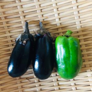 ナスとイエローパプリカ  の初収穫