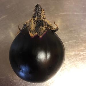 トロトロ炒めナスの第一果収穫