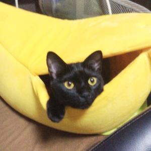 くろねこてんてん in the banana☆