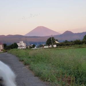 富士山とレオ