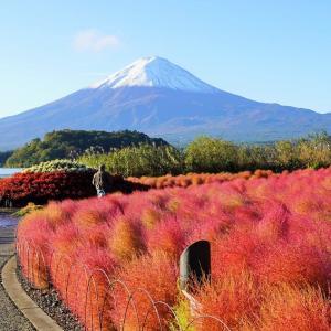 富士山とコキアとワンコさん♪