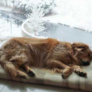 雪が降り続いてます♪