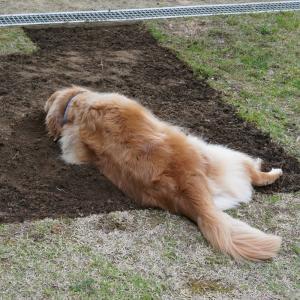芝生の張替え♪