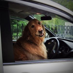 運転手さん♪