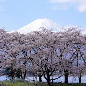 富士山と桜  Mt.Fuji 2021/04/10