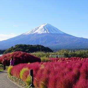 コキアと富士山  Mt.Fuji 2021/10/21