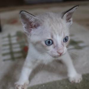 障害がある子猫に支援をお願いします