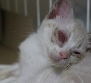 障害のある子猫が結膜炎に・・・