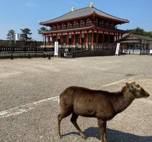 久々の奈良。観光客が減り、鹿せんべい(鹿にはおやつ)をあげる人が少ないため、せんべい購入者への鹿集中が激しい。