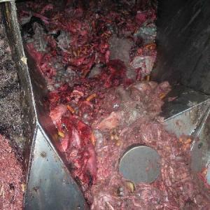 食の危険!牛肉、豚肉、牛乳、の真実を知らせず。狂牛病の可能性がある症状を公開しない国。