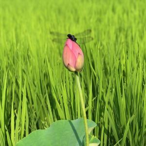 YouTube更新 奈良県農業体験 食育セミナー 週末農業サポート シェア畑 大和アグリラボ