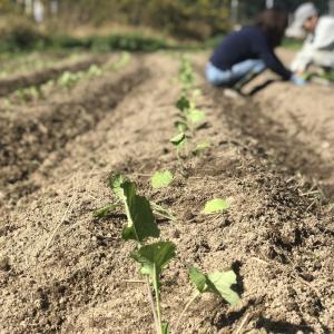 奈良県 農業見学 農業体験 週末農業 農業を始めたい方