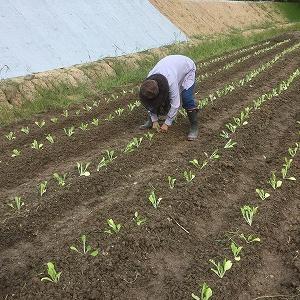 食と農を真剣に考える人が少なくなると正常な食生活に戻れなくなる。