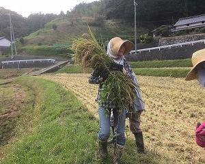 若者の農業就業者が増えている要因は?農業への新しいかかわり方とは?