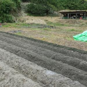 食の改善と同時に作物を育てませんか!大和アグリラボ