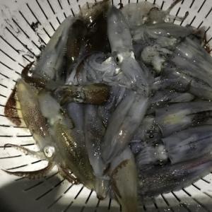 大人4人で ヒイカ釣り~ in姫路