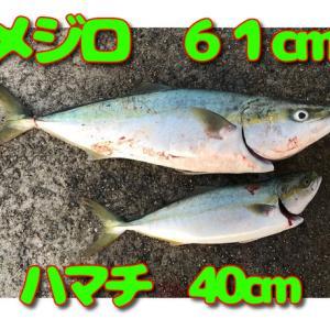 大人3人で青物釣り~ in姫路