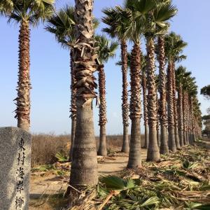 椰子の木の浜