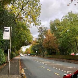 秋らしい紅葉の並木道の写真掲載の予定変更、イギリスの交通事情にあった