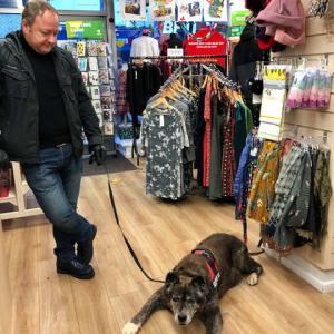 ギネスブックに登録間近、ストックポートの名物長寿犬、「介助犬」資格でイヌの入店お断り店にご来店