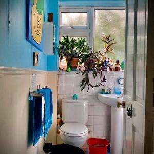 ロックダウンの最中に壊れたトイレとロックダウン終了への大混乱の第一歩.....