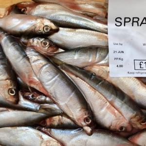大好きな脂っぽい魚、日本にはないらしいスプラット、家じゅうの顰蹙を買いネコと仲良く分け合って食べる