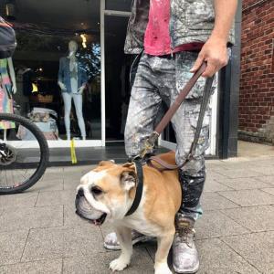 買い物中に発見、ブルブル体をゆすりながらよたよた歩く高齢のイングリッシュ・ブルドッグ、これぞイギリスのイヌ!