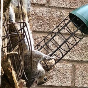 近頃の楽しみ!営業妨害のリス野郎との仁義なき戦い、愛らしい小鳥のお客様目当てのバードカフェ経営