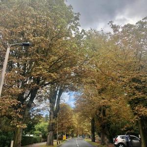 コンカー拾いに夢中になる、美しい秋の日暮れ前(コロナウィルスのパンデミックはどうなった?!)