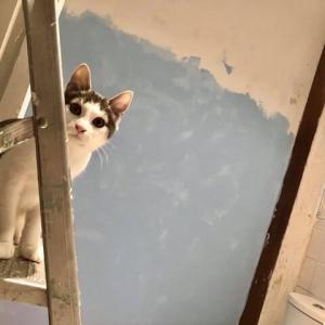 壁 二題;バスルームのペンキ塗りと長いこと足を運んでいないピカディリー・ガーデンズの打ちっぱなし壁