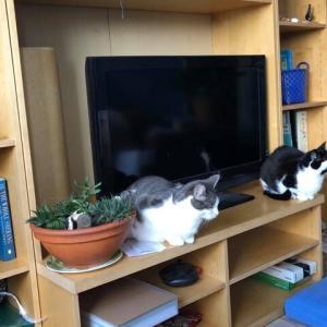 ネコがいるリビングルームの風景、テレビ視聴に夢中になるあまり他人の迷惑を顧みないティーンエイジャー・ネコ