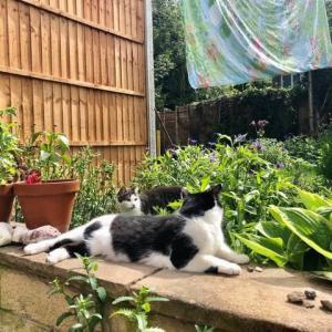 ついに完成、となりの家とうちの家の庭を隔てる高い塀、ネコたちの身近な立ち回り範囲が一気に狭まる!