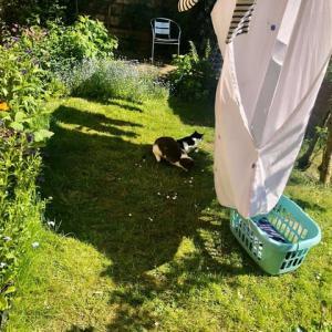 暑い日の午後、悲しい顔で日光浴するフレンドリーではない闘犬系の雑種イヌ。