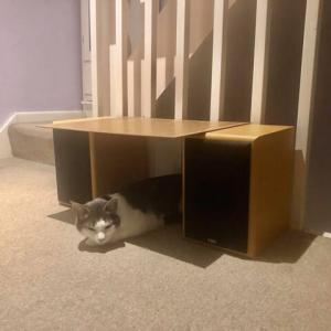 専用の隠れ家を得た、ぜんぜん隠れていないネコの安楽な日常のひとコマ