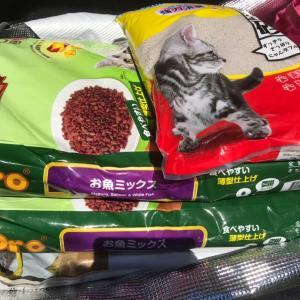 TNRした猫たちと京都のボランティアの家から生還した犬