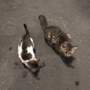 子猫たちとペットのおうちの里親募集